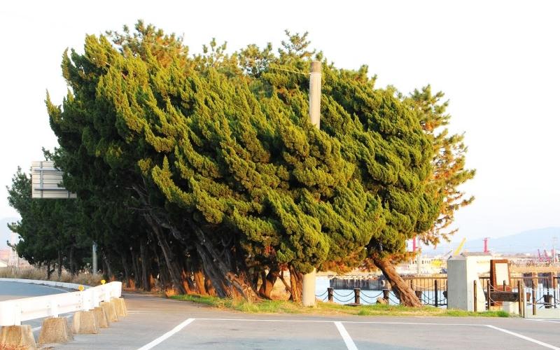 折れ曲がった樹木