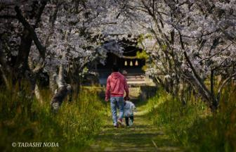 大牟田の桜の名所