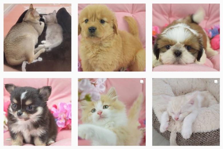 スタードッグスにいる犬や猫